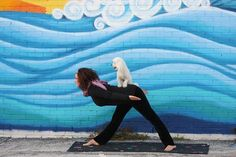 Partner yoga with a dog, looks ridiculous, but I could be convinced of its merits