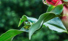 Glassfrog - null