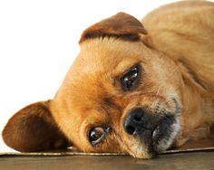 6 Solutions for Dog's Separation Anxiety by Dr. Jennifer Coates, DVM of @petMD.com.com