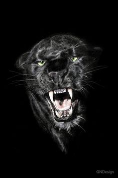 Beautiful Cats, Animals Beautiful, Jaguar Noir, Big Cats, Cats And Kittens, Animals And Pets, Cute Animals, Angry Animals, Baby Animals