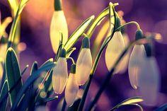 Frühlingsgefühle2