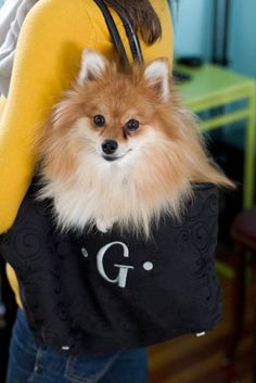 G is for going out #Pomeranian