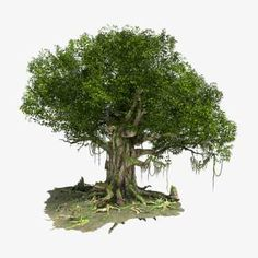 Banyan Tree Bonsai, Game Design, Design Art, 3d Tree, 3d Landscape, Environment Design, Art Drawings Sketches, Creative Inspiration, Trees To Plant