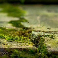 Look Low (St Patrick's Day) by jeffwermers #nature #photooftheday #amazing #picoftheday