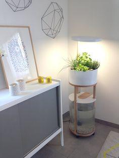 http://www.journal-du-design.fr/design/odena-garden-kit-daquaponie-67513/  Ödena Garden, kit d'aquaponie - Journal du Design