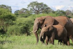 Tanzania - where we wish we could be this #WildlifeWednesday 🌍🇹🇿