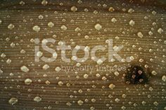 Natural wood texture covered in water droplets royalty-free stock photo