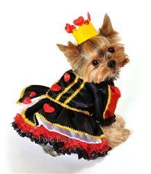 Queen of Hearts puppy costume