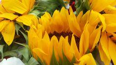 #photografy #flower #love
