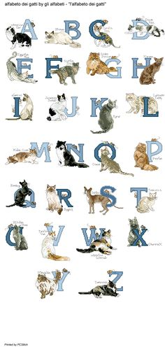 Alfabeto dei gatti
