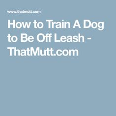 How to Train A Dog to Be Off Leash - ThatMutt.com