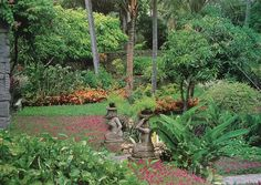 """The terraces of the Bali Hyatt, Sanur, were originally planted with grass, and with a border of """"Lee Kuan Yew Vine"""" (Hoya sikkimensis). In 1984 I redesigned the hotel's softscape and added mass-plantings of colourful white Alternanthera bettzickiana aurea, red Iresine herbstii acuminata and yellow Wedelia trilobata ground-covers. --- """"Tropical Garden Design"""" by Made Wijaya"""