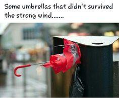 Ireland Weather, Survival