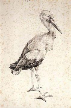 The Stork - Albrecht Durer