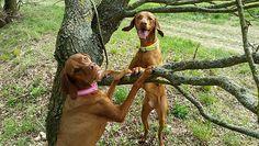 Easy Dogs / Tricks zu Hause und beim Spaziergang, Jaqueline Hafermann