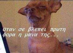 50 ελληνικές αστείες φωτογραφίες που κάνουν θραύση τη στιγμή που μιλάμε Greek Quotes, Funny Photos, True Stories, Haha, Jokes, Humor, Animals, Crazy Friends, Funny Stuff