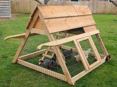 Do Your Backyard Chickens Need a Tractor?
