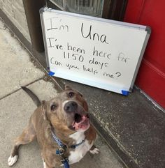 Pit Bull Has Spent More Than Half Her Life In Shelters