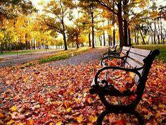 Passando...  Parado na rua,  entre árvores tortas,  Vejo o cair das folhas sobre as calçadas,  Não parecem tristes estas árvores dobradas,  Também suas folhas, não parecem mortas.     Caem como bailarinas aladas,   Sobre um palco de pedras geladas.  Dançam para uma platéia em movimento,   Aguardando a chegada do vento.     Me surpreendo com o vento a passar,  Recolhendo as folhas soltas nas ruas,   Para leva-las, quem sabe, ao escritor de todas as histórias,  Que extrairá das folhas caídas…