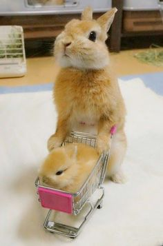 Mama bunny with this little bun in shopping cart , must be looking for the veggie department at the store!