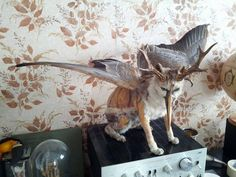 Hybrid taxidermy by Michael østergaard Sørense. Spotted in Denmark.  Submitted by Michael via Facebook