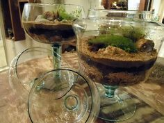 Terrários feitos em vidros de decoração