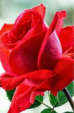 Pretty Roses, Beautiful Roses, Beautiful Gardens, Lavender Roses, Pink Roses, Rose Orange, Painting The Roses Red, Rose Trees, Rose Pictures