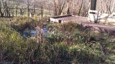 Pond on Bill Quay farm, Pelaw
