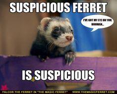 Falcor the ferret! Gorgeous little guy :D