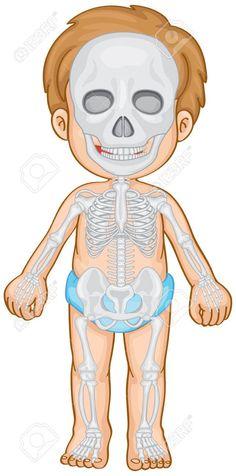 Skeletal system in human boy Royalty Free Vector Image