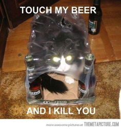 funny cats | funny-cat-inside-bottle-package