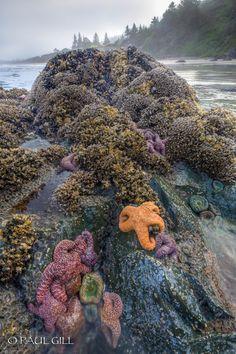 Low tide, California Coast