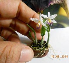 Idéias & Coisas - artesanato e miniaturas: ORQUÍDEAS EM MINIATURA Miniature Orchids, Miniature Plants, Exotic Flowers, Beautiful Flowers, Mini Orquideas, Rare Orchids, Growing Orchids, Orchid Arrangements, Mini Fairy Garden