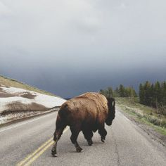 Yellowstone trip with Steph.& being chased by a buffalo. [Street Walker - iPhone photography by Kevin Russ] Iphone Photography, Wildlife Photography, Photography Blogs, Camping Photography, Mountain Photography, Urban Photography, Mobile Photography, White Photography, Wyoming