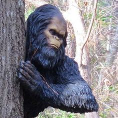 Yeti Sightings, Bigfoot Sightings, Bigfoot Sasquatch, Sketches Of People, Animal Statues, Lion Sculpture, Yard, Craft Ideas, Money