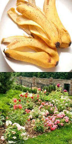 Fertilizantes con cascara de platano Garden Art, Garden Plants, Garden Design, Porch Topiary, Fast Healthy Meals, Healthy Food, Plant Care, Growing Vegetables, Permaculture