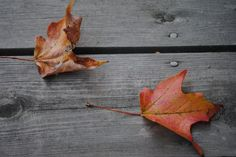 autumn leaves:    photography by emily swift