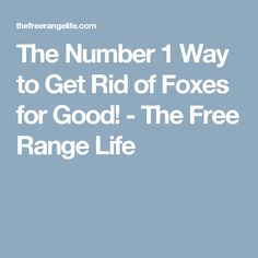 The Number 1 Way to Get Rid of Foxes for Good! - The Free Range Life