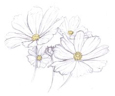 This would be a pretty and delicate daisy tattoo Daisy Flower Drawing, Flower Drawing Tutorials, Flower Sketches, Floral Drawing, Flower Art, Watercolor Cards, Watercolor Flowers, Watercolor Paintings, Desenho Tattoo