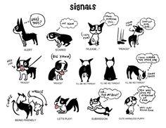 Body Language & Calming Signals