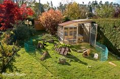 jolie maison pour lapins