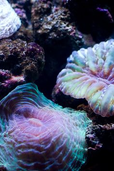Sea Anemones are named after the anemone, a terrestrial flower. There are more sea anemone species found throughout the world's oceans. Underwater Creatures, Underwater Life, Ocean Creatures, Underwater Lights, All Nature, Science Nature, Vida Animal, Life Under The Sea, Beneath The Sea