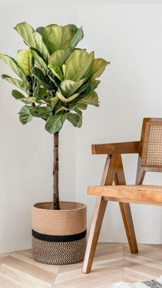 Indoor Tree Plants, Fake Plants Decor, House Plants Decor, Plant Decor, Faux Plants, Glazed Walls, Floor Plants, Interior Plants, Diy Home Decor