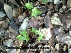 Thomasina's Words: Leaves - Never Giving Up and Life Always Moves For...