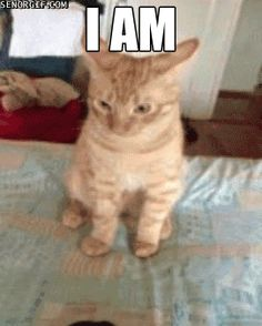 Fab kitty cute funny animals, funny animal pictures, cute cats, the funny, Cute Funny Animals, Funny Animal Pictures, Funny Cute, Cute Cats, Hilarious, Super Funny, Funny Happy, Funny Videos, Funny Gifs