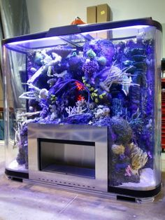 An aquarium is a pleasant manner of displaying that you simply love nature and that you've a need to deal with it. A house aquarium is one of the best. Aquarium Stand, Home Aquarium, Aquarium Design, Reef Aquarium, Aquarium Fish Tank, Aquarium Ideas, Shedd Aquarium, Fish Aquariums, Tanked Aquariums