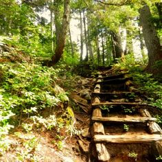 St Marks Summit trail - forest ladder in Cypress Provincial Park, Vancouver