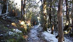 Featured Art - King Billy forest Cradle Mountain  by Sarah  King