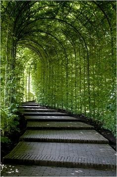 I would love to recreate this when I get a place with enough space! Stunning walkway!