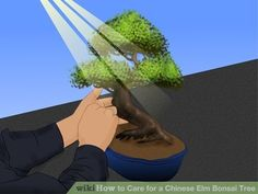 Image titled Care for a Chinese Elm Bonsai Tree Step 2